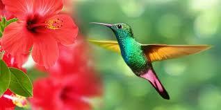 Los colibríes ven colores que los humanos sólo pueden imaginar